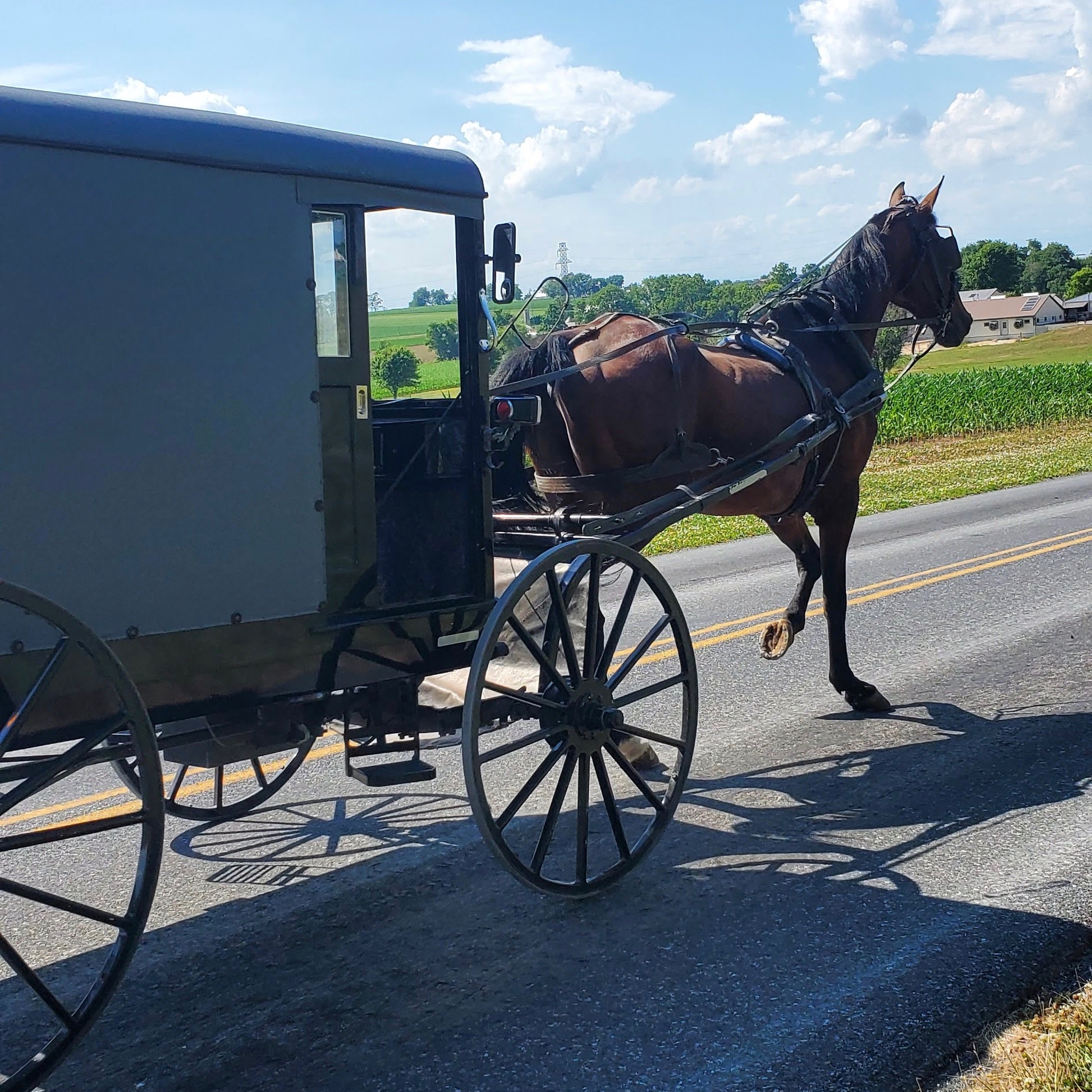 Penn Dutch buggy